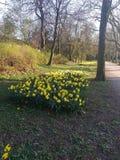 Point jaune en parc images stock