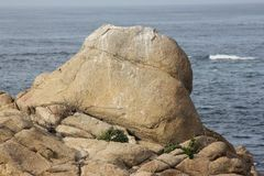 Point Joe, Pebble Beach, 17 Mile Drive, California, USA. Scenic point with large rocks, providing pleasant view of surfing sea, whales and migratory birds Stock Images