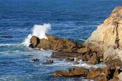 Point la Californie de sel Photos stock