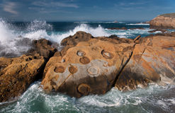 Point Lobos` Concretions Stock Photo