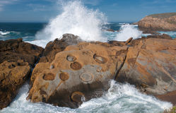 Point Lobos` Concretions Stock Photography