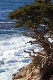 Point Lobos State Park Stock Photo