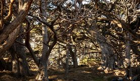 Wooded area at Point Lobos in California stock images