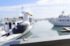Point Loma, San Diego stock afbeelding