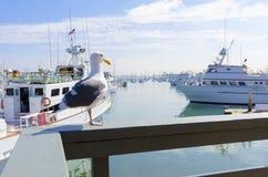 Point Loma, San Diego royalty-vrije stock afbeelding