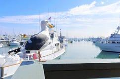 Point Loma, San Diego royalty-vrije stock foto