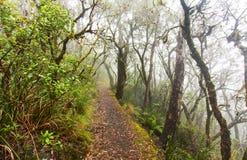 Point Lookout, New England National Park, AU. A foggy day at Point Lookout in New England National Park, NSW, Australia Stock Photos