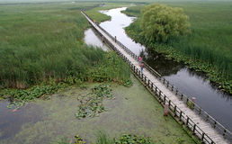 Point Pelee Boardwalk Royalty Free Stock Images