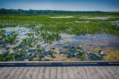 Point Pelee national park boardwalk in the summer, Ontario, Cana Stock Photos