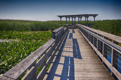 Point Pelee national park boardwalk in the summer, Ontario, Cana Stock Images