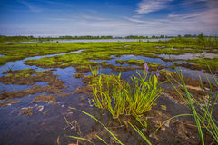 Point Pelee National Park, Ontario, Canada Stock Photo