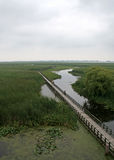 Point Pelee Swamp Boardwalk Royalty Free Stock Image