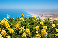 Point Reyes, California. Wildflowers growing on the Pacific coast of California Stock Photos