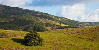 Point Reyes Landscape royalty free stock images
