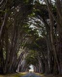 Point Reyes Trees Royalty Free Stock Photo
