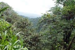 Point scénique de perspectives dans la réservation écologique de Cotacachi Cayapas Image libre de droits