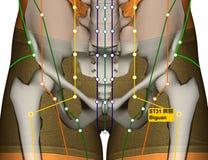Point ST31 Biguan, méridien d'acuponcture d'estomac illustration de vecteur