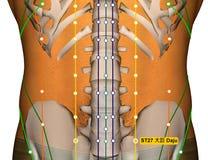 Point ST27 Daju, méridien d'acuponcture d'estomac illustration stock