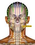 Point ST4 Dicang, méridien d'acuponcture d'estomac illustration libre de droits