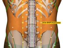 Point ST24 Huaroumen, méridien d'acuponcture d'estomac illustration de vecteur
