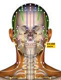 Point ST6 Jiache, méridien d'acuponcture d'estomac illustration de vecteur