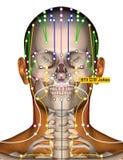 Point ST3 Juliao, méridien d'acuponcture d'estomac illustration de vecteur