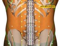 Point ST21 Liangmen, méridien d'acuponcture d'estomac illustration libre de droits