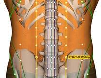 Point ST26 pleurant, méridien d'acuponcture d'estomac illustration libre de droits