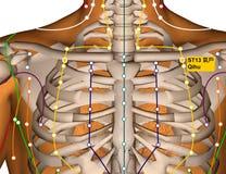 Point ST13 Qihu, méridien d'acuponcture d'estomac illustration stock