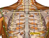 Point ST18 Rugen, méridien d'acuponcture d'estomac illustration libre de droits