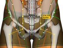 Point ST28 Shuidao, méridien d'acuponcture d'estomac illustration libre de droits
