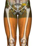Point ST28 Shuidao, méridien d'acuponcture d'estomac illustration stock