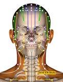 Point ST10 Shuitu, méridien d'acuponcture d'estomac illustration de vecteur