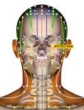 Point ST2 Sibai, méridien d'acuponcture d'estomac illustration de vecteur