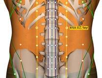 Point ST23 Taiyi, méridien d'acuponcture d'estomac illustration libre de droits