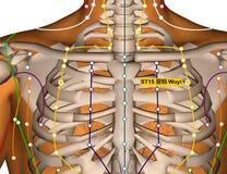 Point ST15 Wuyi, méridien d'acuponcture d'estomac illustration de vecteur