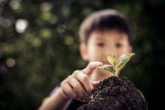 Point to seedling. Dark color tone. Selective focus on Little seedling in black soil point by child finger. Earth day concept Stock Image
