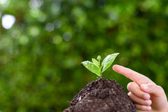 Point to seedling Royalty Free Stock Photography