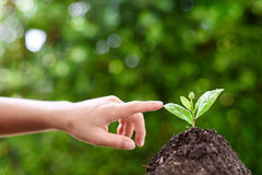 Point to seedling. Selective focus on Little seedling in black soil point by child finger. Earth day concept Royalty Free Stock Image