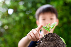 Point to seedling. Selective focus on Little seedling in black soil point by child finger. Earth day concept Stock Photography