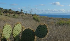 Point Vicente Lighthouse and Cactus on the Palos Verdes Peninsula, Los Angeles, California Stock Photos