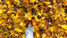 Man walking on a autumn leaves. Slow motion. stock footage