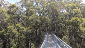 Point of View of a person walking on Valley of the Giants Tree Top Walk