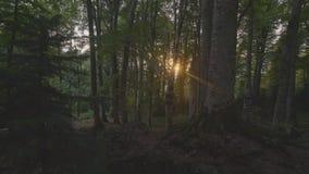 Point of View pone verde el bosque del verano y la luz del sol brillante a través de árboles metrajes