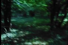 Point of view shot of man running in woods stock video