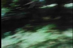 Point of view shot of man searching for someone in woods stock video