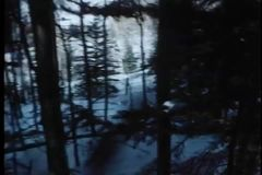 Point of view shot of person walking through woods stock footage