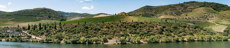 Point of view shot of terraced vineyards in Douro Valley. Point of view shot from historic train in Douro region, Portugal. Features a wide view of terraced Royalty Free Stock Image