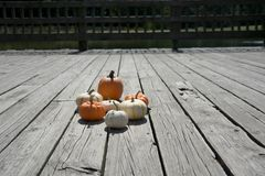 Point of view. Sun shining giving the best light on the Pumpkins stock photo