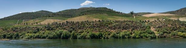 Point of View tiró de viñedos colgantes en el valle del Duero Imágenes de archivo libres de regalías